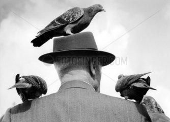 Tauben auf Kopf und Schulter