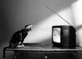 Katze schaut fern