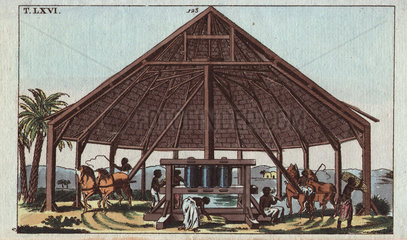 Sugar press with slaves driving horses to process sugar cane on a plantation from Wilhelm's Encyclopedia of Natural History 1813.