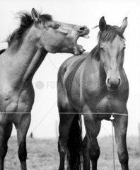 2 Pferde stehen nebeneinander