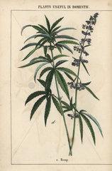 Plants useful in domestic economy  the arts  etc.