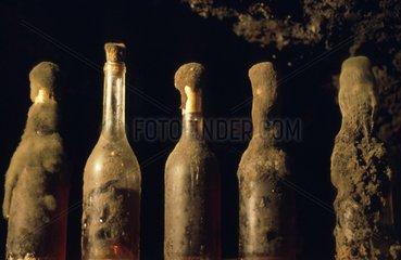 Schimmel auf Weinflaschen