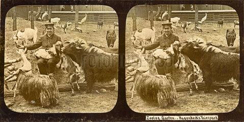 Hagenbecks Tierpark  Hamburg  1895