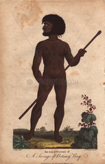 A Savage of Botany Bay. Australian aborigine  naked  with beard and afro  decorated with tattoos  carrying a stick.
