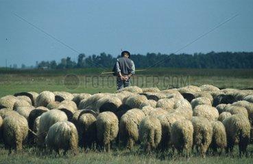 Schaefer mit Schafsherde