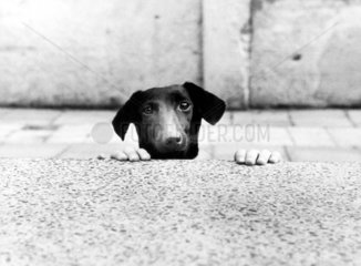 Hundekopf Hands gucken Mauer