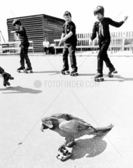 Kinder und Papagei beim Rollschuhlauf