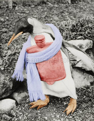 Pinguin Erkaeltung Schal Waermflasche