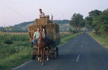 zwei Maenner auf Pferdekutsche bei der Heuernte