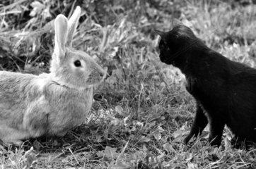 Katz und Hase im Profil