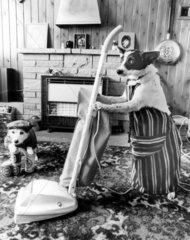 Hunde beim Staubsaugen