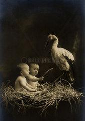 zwei Babies im Storchennest