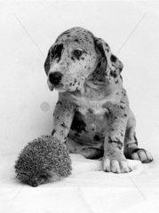Hund und Igel