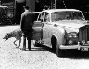 Hund steigt aus Limousine