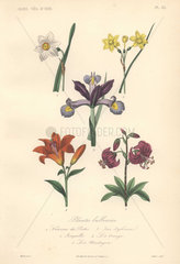 Decorative botanical print with daffodils  iris  lily and martagon lily