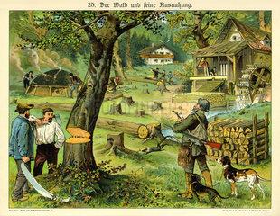 Der Wald und seine Ausnutzung  1885