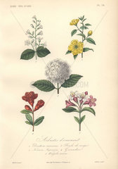Decorative botanical print with abuliton  globeflower  deutzia and gloxinia