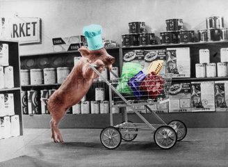 Schwein kauft Schweinefleisch ein