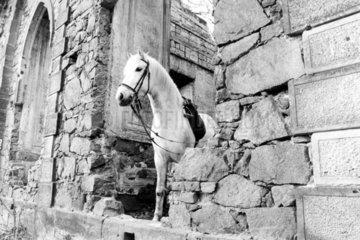 Pferd in der Ruine