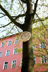 Baum Uhr