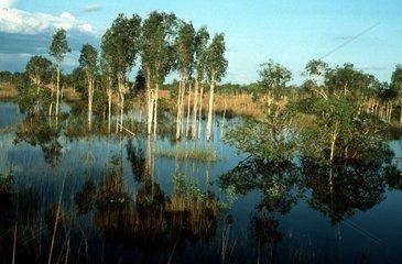 Sumpflandschaft in Nordaustralien