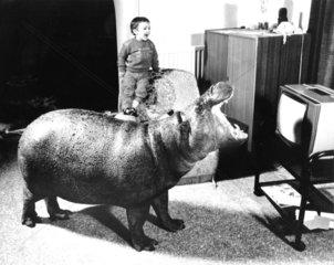 Nilpferd schaut TV