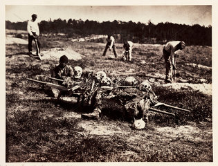 Remains of Union soldiers killed at Cold Harbor  Virginia  1864  (April 1865).