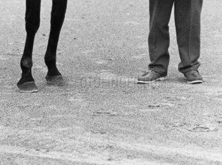 zwei Pferdebeine und zwei Menschenbeine