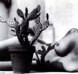 Frau Nackt Kaktus