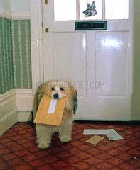 Hund mit Brief im Maul