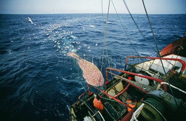 Arbeiten an Bord eines deutschen Fischtrawlers - Fang