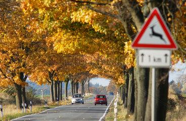 Alleen in Mecklenburg-Vorpommern