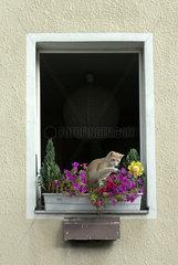 Katze spielt in Blumenkasten an Fenster