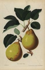 Peach pear  Pyrus communis cultivar