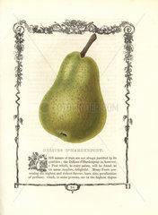 Delices d'Hardenpont pear  Pyrus communis