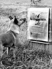 Hund liest Nachrichten