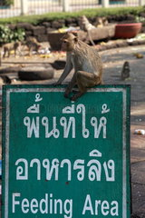 Long-tiled macaque (Macaca fascicularis) on the panel of a feeding area of macaques in Lopburi  Thailand
