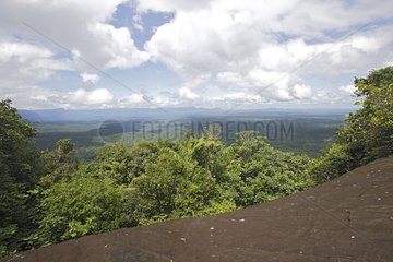 Panoramic sight of the tropical rainy forest Venezuela
