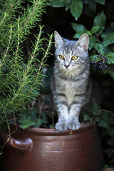 Kitten sitting on a pottery in a garden