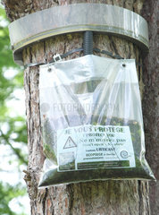 Eco trap caterpillar of Pine processionary moth (Thaumetopoea pityocampa) hanging on a trunk  Anglet  France