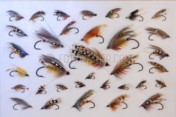 Flies to old salmon  Haut-Rhin