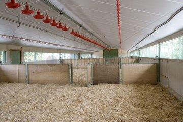 Vide sanitaire dans un élevage industriel de volaille France
