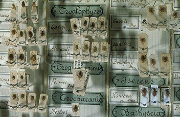Mise en collection des récoltes de Coléoptères cavernicoles