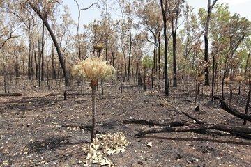 Landscape of forest burned in the NP Kakaku Australia