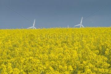 Power wind mills across field of rape blossoms - Spain