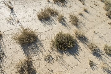 Vegetation of the steppe - Bardenas Reales NP Spain