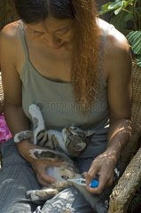 Woman taking the temperature of a kitten