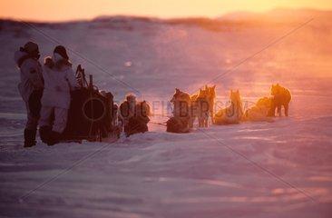 Attelage de chiens à Boothia peninsula Arctique canadien