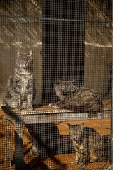 Cats in a cage in a shelter SPA France