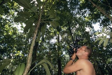Man photographing a snake in tree French Guiana